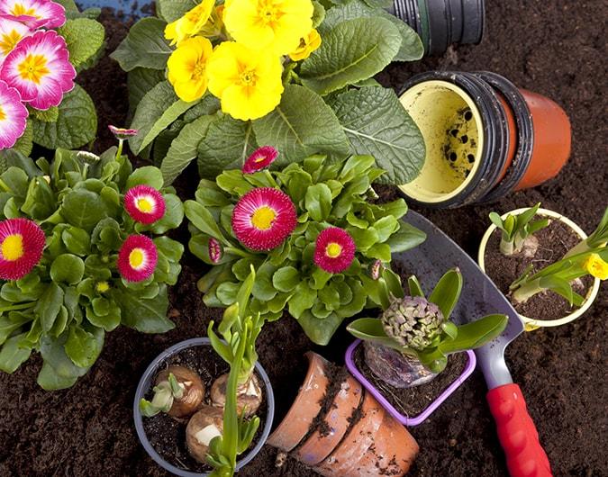 consejos basicos para cuidar tus plantas