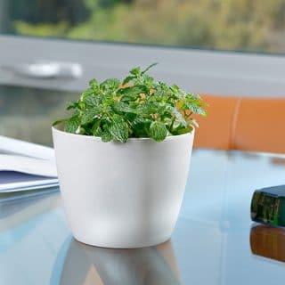 decora tu casa con plantas aromaticas