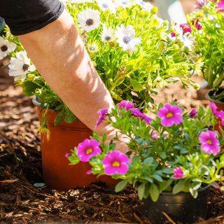 ¿Cómo proteger tu jardín?