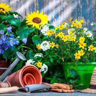 Cómo cuidar las rosas de tu jardín
