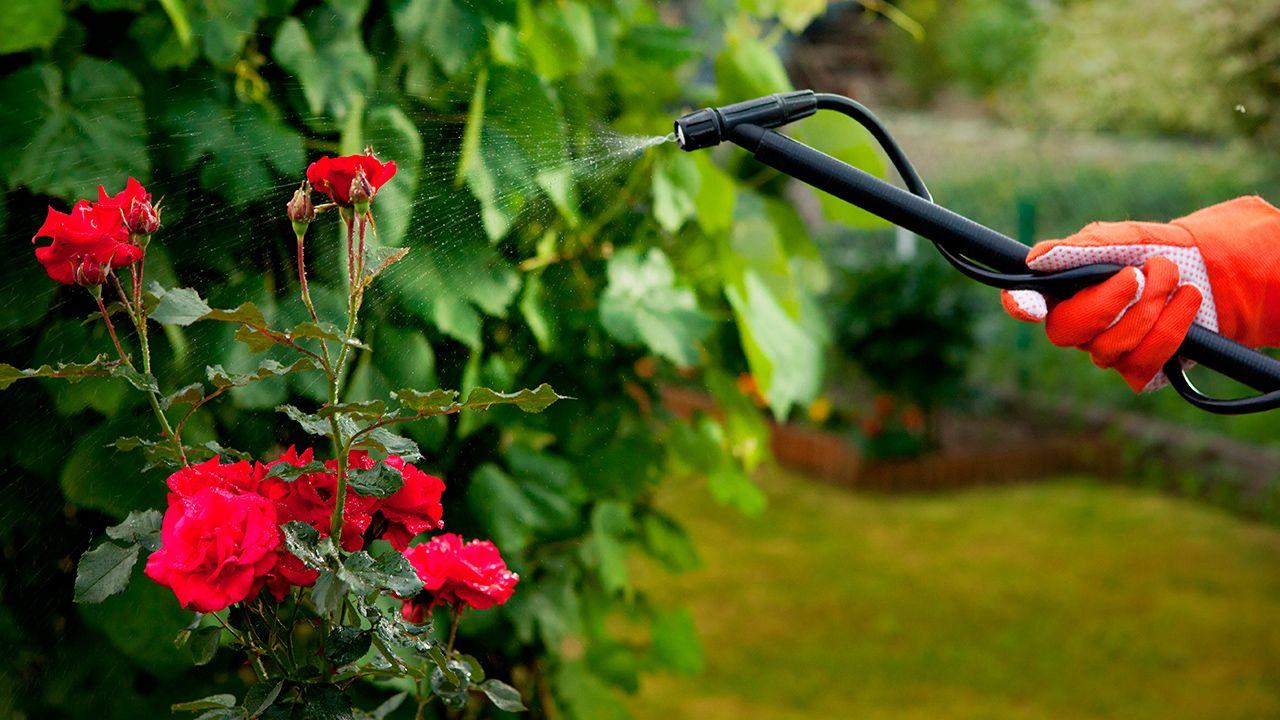 Insecticida, fungicida, herbicida… ¿cómo y cuándo usarlos?