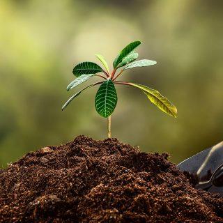 Tierra o humus, el suelo para tu jardín