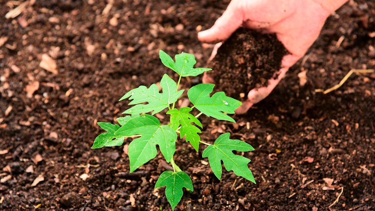 Escoge el mejor fertilizante
