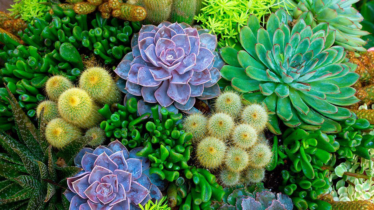 plantas ideales para un jardín estilo desértico – the home