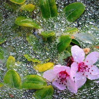 Cómo proteger a tu jardín de la lluvia