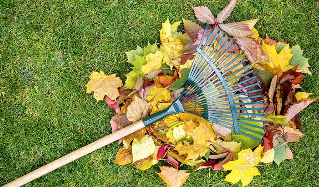 La mejor manera de limpiar tu jardín
