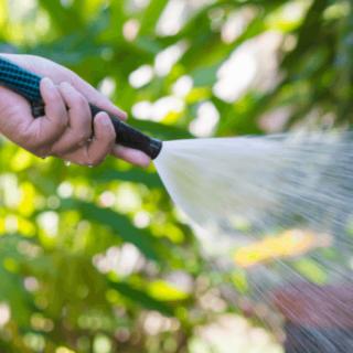Consejos para regar las plantas en invierno