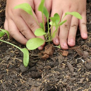 Cosas que debes saber sobre la tierra para plantas